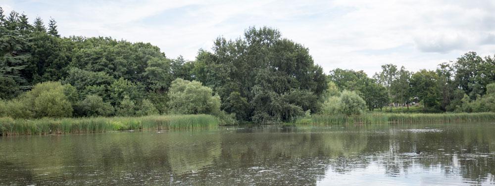 warnham-nature-reserve-Millpond
